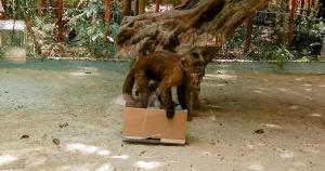 Programa de Enriquecimiento en monos capuchinos llorones
