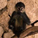 ¿Conoces las Normas Oficiales que protegen la biodiversidad?