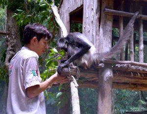 ¿Por qué liberar monos araña?